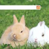 Bing Sosyal Haber Servisi Olacak