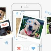 Köpekler İçin Flört Uygulaması: Tindog