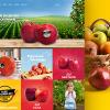 Doal Meyve Web Sitesi Yenilendi!