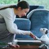 Sony'nin Robot Köpeği Aibo, Yapay Zeka Teknolojisiyle Yenilendi