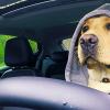 YouTube Videonuzun İzlenme Oranıyla Ücretsiz Opel Alabilirsiniz