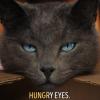 """Karnı Acıkan Kediyle """"Hungry Eyes"""" Parçasında Karaoke"""