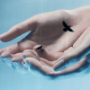 Kuşları Besleyen Billboard