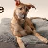 Samsung'dan Köpek Sahiplenenlere Ücretsiz Elektrik Süpürgesi