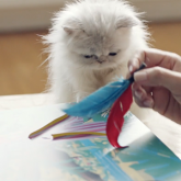 Whiskas'tan Meraklı Kediler ve Sahipleri İçin Hikaye Kitabı