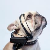 Köpekleri Konuşturan Teknoloji: No More Woof