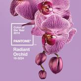 Pantone, 2014 Rengini Belirledi!