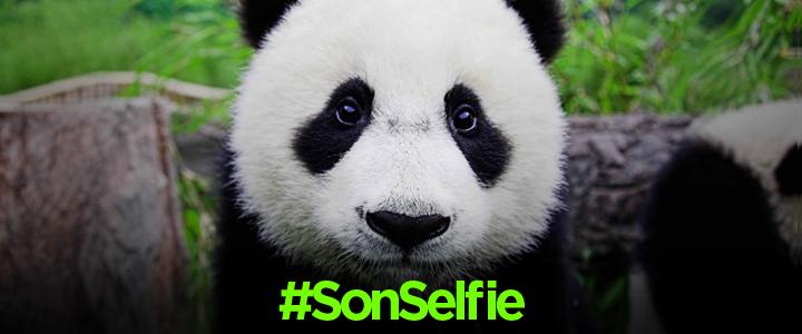 WWF Türkiye Snapchat Kampanyası: #SonSelfie