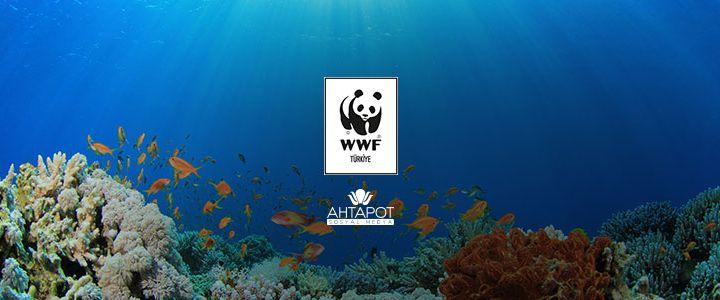 WWF-Türkiye'nin Tercihi Ahtapot Sosyal Medya Oldu!