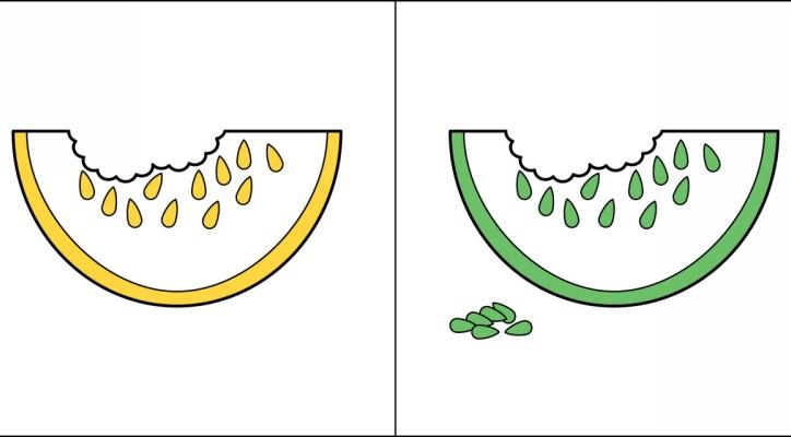 5-en-iyi-illüstrasyonlar-meyve