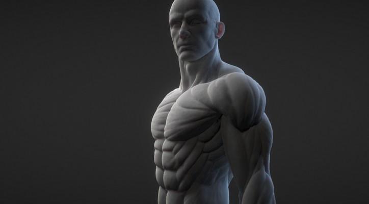 poly-anatomy